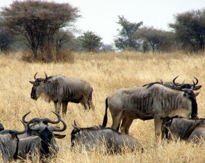 Säugetiere in afrika die afrikanische tierwelt ist in ihrer form als